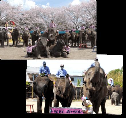 年間イベント 春