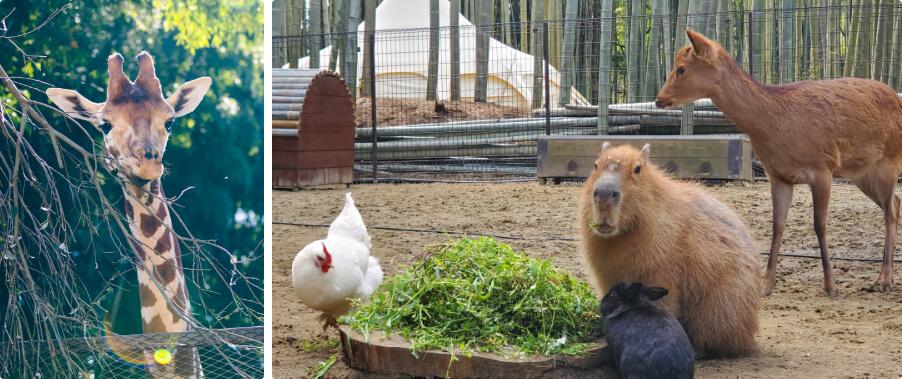 キリンさんと動物たち