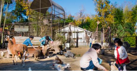 サユリワールド園内 動物と触れ合うファミリー